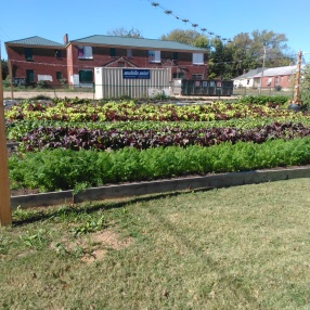 Civic-minded Improvements: Community Garden