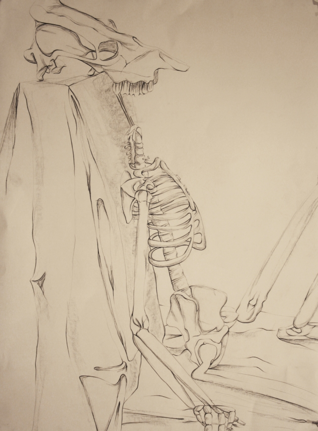 AshleyLulo_hires_Skeleton